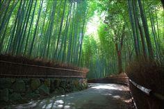 fantastic bamboo:Kyoto,Sagano