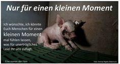 Foto:    Jeder sollte einmal das unerträgliche Leid der Tiere am eigenen Leibe spüren ... und sei es auch nur für einen Moment ....