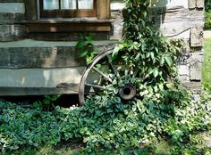Wagon wheels and ivy.