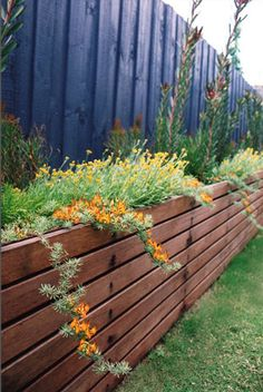 leucadenron safari sunset planted along the fence line to create height ground covers
