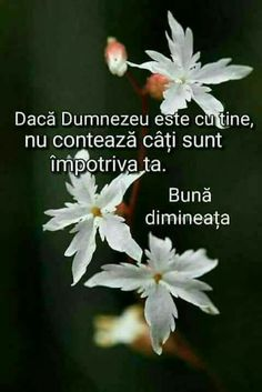 Sola Scriptura, Good Morning Messages, Wise Words, Quotes, Floral, God, Bible, Good Morning Wishes, Qoutes