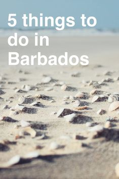 Top 5 things to do in Barbados