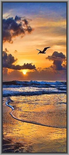 AMAZING SUNSET / BEACH #sky clouds orange blue wave bird #by www.pinterest.com/pin/136937644899598085/