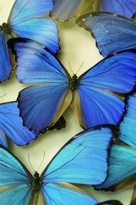 all things blue - butterfly