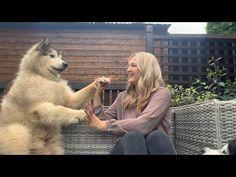Giant Alaskan Malamute, Husky, Pup, Dogs, Animals, Youtube, Animales, Dog Baby, Animaux