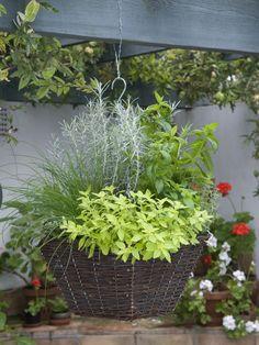Hanging Herb Basket