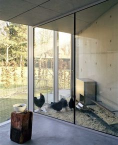 I want to raise chickens and this would be the perfect area!