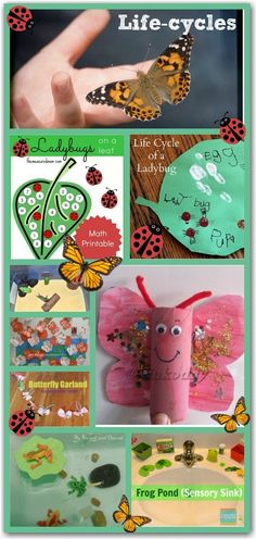 Lots of fun learning activities for kids based on the life-cycles of frogs, bugs and butterflies