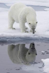Svalbard Polar Bear Expedition 2015