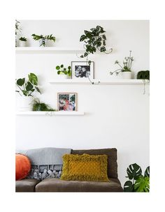 The loungeroom 'shelfie'. In the top-right is the 'IT plant', according to Marita, a Monstera Adansonii. Artwork 'Sweet Peas and Studio Table', by Elizabeth Barnett purchased from Modern Times. Living Room Shelves, Shelves In Bedroom, Living Room Decor, Room With Plants, Shelves With Plants, Indoor Plant Shelves, Estilo Interior, Tumblr Rooms, White Shelves