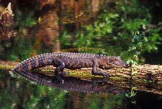 Suwanee Wildlife refuge