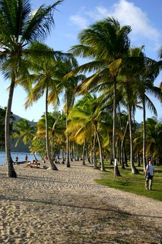 Plage de Saint Anne - Martinique, I remember walking down this beach! Saint Anne Martinique, Iles Grenadines, Great Places, Places To See, French West Indies, Palm Trees Beach, Caribbean Sea, Beautiful Beaches, Vacation Spots
