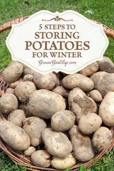 Do you grow your own potatoes or buy in bulk from a farmer market? Follow these 5 easy steps to storing potatoes in a basement, root cellar or other cool areas in your home or garage for winter to keep your potatoes fresh.: