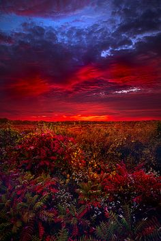 ❥‿↗⁀♥ simply- beautiful-world panatmansam: by Phil Koch Beautiful Sunset, Beautiful World, Beautiful Images, Simply Beautiful, Photos Panoramiques, Landscape Photography, Nature Photography, Photos Voyages, Nature Pictures