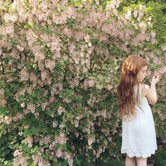 Elle Pink and the lilac tree (instagram: gingerlillytea)
