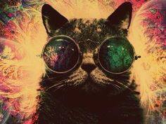 Psychedelic Hipster Cat psychedelic cat