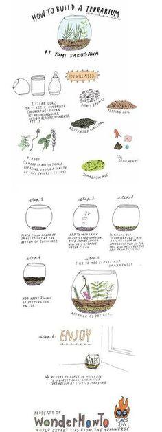 DIY Build Your Own Terrarium DIY Terrarium Garden: