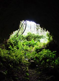 A hidden cave we found in Cornwall Barracks, Jamaica