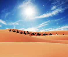 Morocco camel trekking in Merzouga desert, spend the night in a desert camp with Berber drums music under starry sky in the middle of the Sahara. Desert Tour, Desert Sunset, Dune Book, Camping Tours, Free Park, Luxury Camping, The Dunes, Marrakech, Caravan