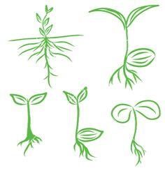 Set hand draw sprouts plants seeding vector 1492683 - by kumdinpitak on VectorStock®