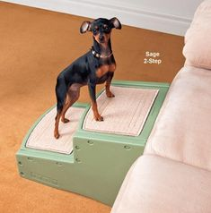 Pet Stairs For Small Dogs 14