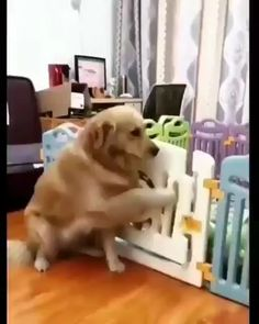 Things that make you go AWW! Like puppies, bunnies, babies, and so on. A place for really cute pictures and videos! Cute Funny Animals, Cute Baby Animals, Funny Dogs, Animals And Pets, Cute Cats, Cute Puppies, Dogs And Puppies, Doggies, I Love Dogs