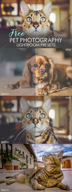 Free #Pet #Photography Lightroom #Presetsare optimized specifically for Pet Photographyto save your time editing and instantly enhance your photos. These presets have been tested with a wide variety of images. via @creativetacos