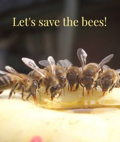 Give thanks for the pollinators and take action to protect them!