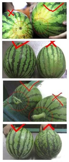 Watermelon: How To Pick The BEST One - On the opposite of the stem (where the flower fell off) is a small round black hole ... the one with the SMALLEST hole is the SWEETEST!