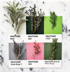 food-pantone-herbes-aromatiques