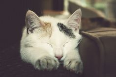 """""""It is better to cut off the sleeve of your best robe than to disturb a sleeping cat."""" --The Prophet"""
