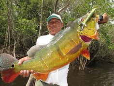 Peacock Bass Fishing Trips and Peacock Bass Fishing Brazil starting at $4,995.