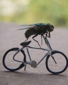 Bizarre & Weird Photo: dead flies - belgium-based artist nicholas hendrickx loves to take macro-photography of flies doing everyday things