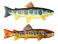 The number one resource for Fishing gear and information Fish Artwork, Fish Wall Art, Best Fishing, Fly Fishing, Trout Fishing Bait, Fish Rocks, Fish Drawings, Exotic Fish, Fish Design