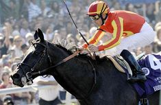 Midnight Lute Pedigree Profile Bob Baffert, Breeders Cup Classic, The Belmont Stakes, Derby Winners, Big Brown, Three Year Olds, Sea Birds, Kentucky Derby, Horse Racing