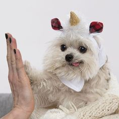 Cute dog giving high five....