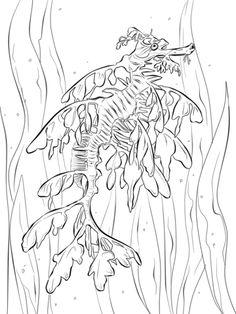 Realistischer Großer Fetzenfisch Ausmalbild
