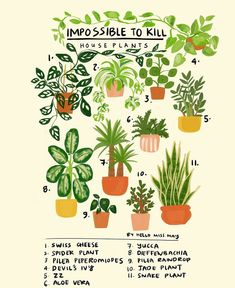 Impossible to kill house plants Plants indoor. Easy to take care. House Plants Decor, Plant Decor, Yucca Plant, Cactus, Jade Plants, Spider Plants, Snake Plant, Plant Care, Wabi Sabi