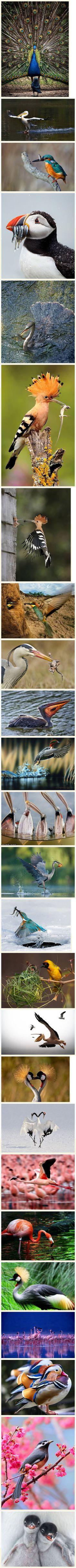 beautiful birds#Wildlife #Photography #Birds