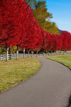 Resultado de imagen de pretty fall driveway