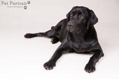 Hondenfotografie Hillegom - Foto van mijn eigen zwarte Labrador teefje Juno