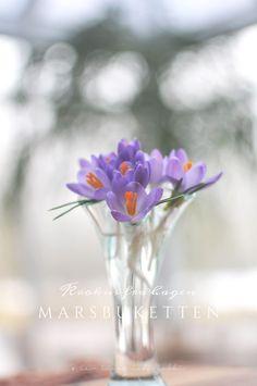 Jeg har plukket blomster i hagen… …de aller første som dukket opp av bakken – noen supersøte, lilla krokus. Enda er det ganske kaldt ute om nettene, men noe våkner til liv i vårsolen og det er så fantastisk vakkert å oppleve. Disse krokusene var ganske små da jeg plukket med meg noen inn, men...Continue