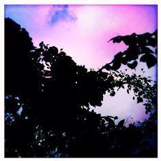 Black rose and pink sky