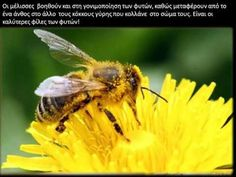'Bees with Alzheimer's?' Aluminium pollution linked to dementia in bees How To Kill Bees, Us Department Of Agriculture, Bee Friendly, Plant Nursery, Air Pollution, Bee Keeping, Yellow Flowers, Gardening Tips, Container Gardening