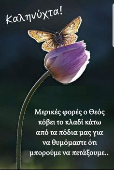 Good Night Flowers, Night Pictures, Good Morning, Greece, Photos, Buen Dia, Greece Country, Pictures, Bonjour