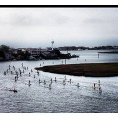 Tried Stand Up paddle boarding in Carolina Beach last year.  Fun but harder than it looks.  Here's a pic from the SUP Caolina Cup competition at Wrightsville Beach NC