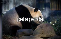 Pet a panda