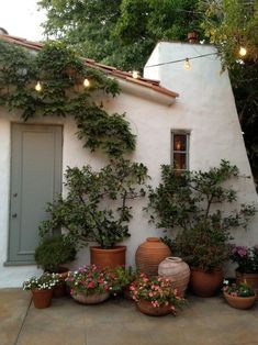 I love everything about this...the adobe, the lights, the trees in the terra cotta pots.