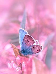 Поэзию можно увидеть повсюду... В каплях росы на паутинке, изгибе стебелька цветка, взмахе крыльев бабочки... | Крылова Татьяна. Обсуждение на LiveInternet…
