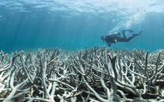 Great Barrier Reef damage: 'We've never seen anything like this before'